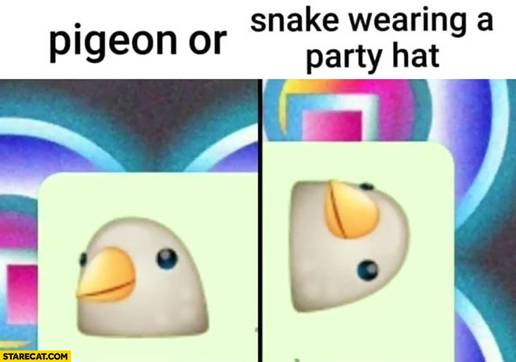 Pigeon or snake wearing a party hat