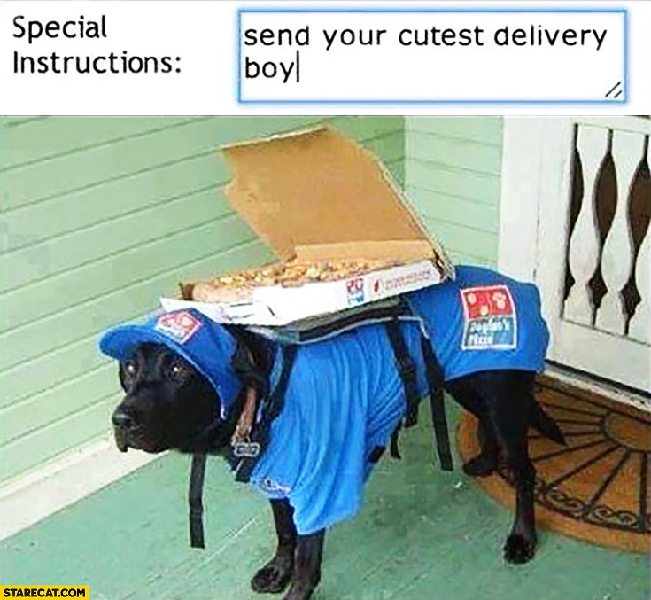 Pizza order special instructions: send your cutest delivery boy. Dog delivering pizza