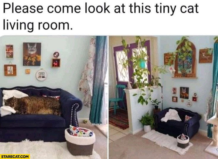 Please come look at this tiny cat living room