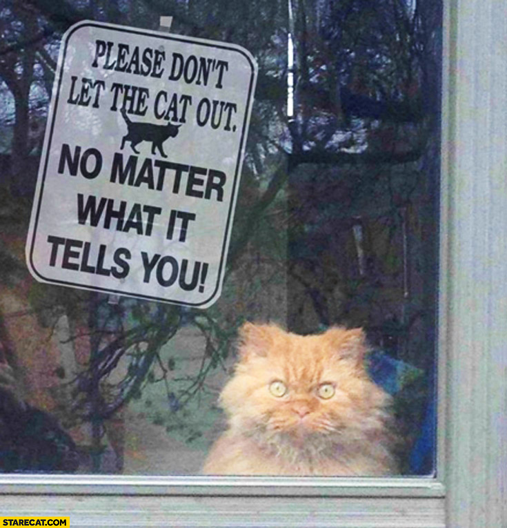 Please don't let the cat out no matter what it tells you