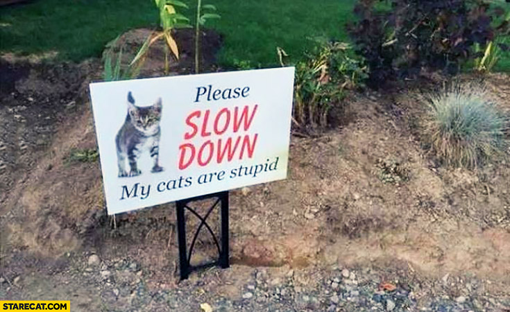 Please slow down my cats are stupid creative sign