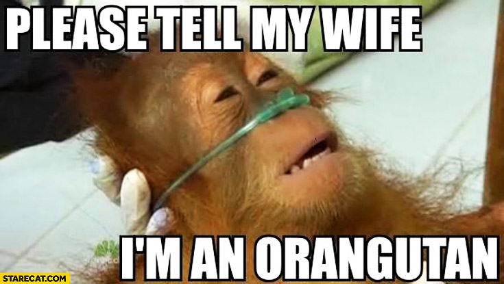 Please tell my wife I'm an orangutan