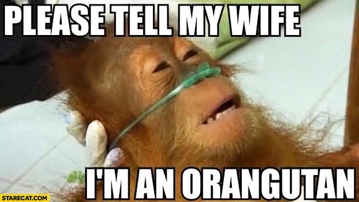 Please tell my wife I'm an orangutan