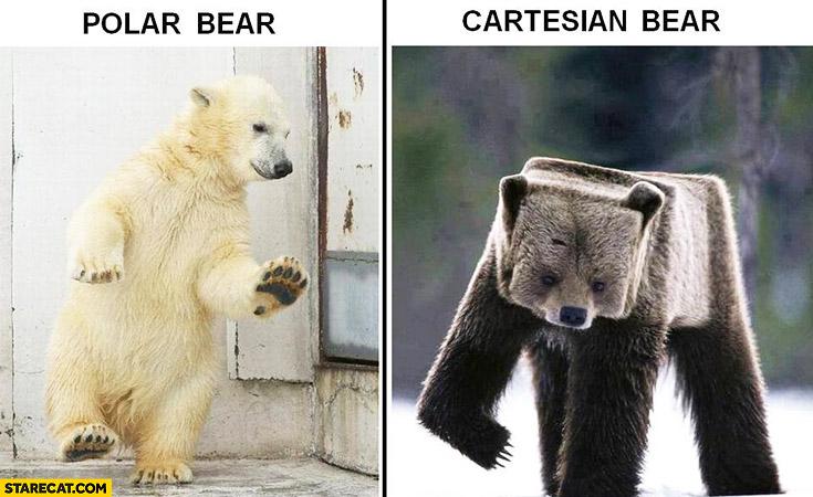 Polar bear, cartesian bear comparison