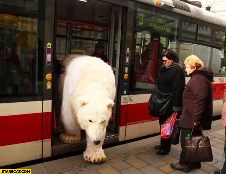 Polar bear exiting metro tram