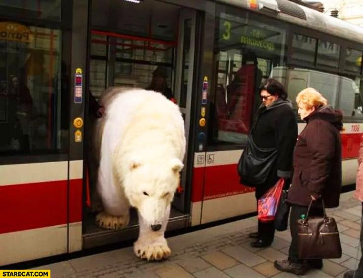 Polar bear exiting metro tram