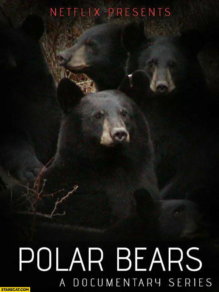Polar bears a documentary series by Netflix black bears