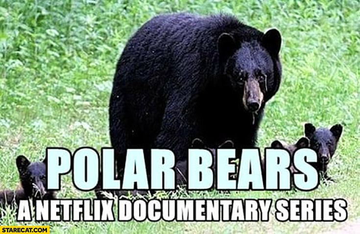 Polar bears a Netflix documentary series actually black bears