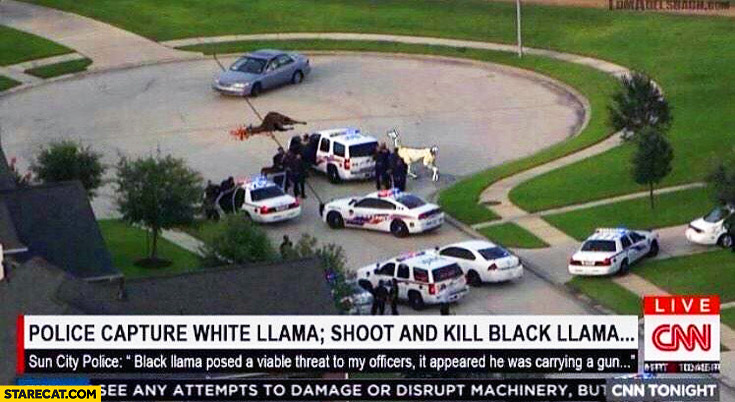 Police capture white llama shoot and kill black llama