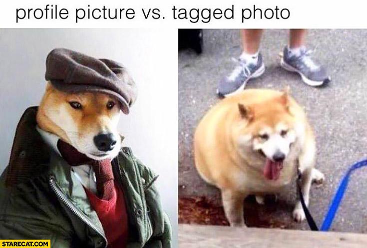 Profile picture vs tagged photo fat dog