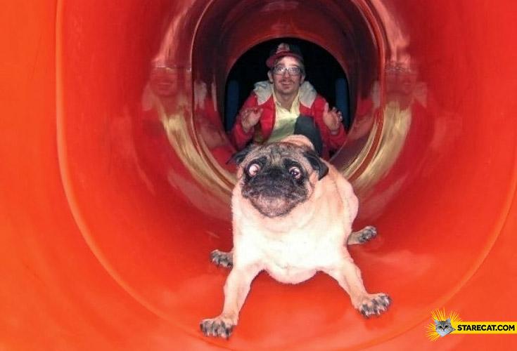 Pug on a chute