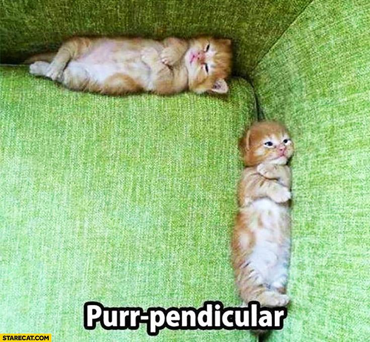 Purr pendicular cats cute kittens