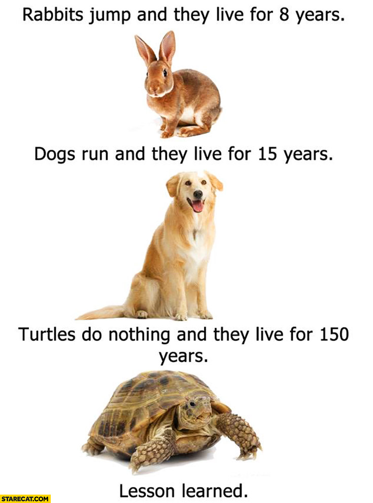 Rabbits jump and live 8 years, dogs run and live 15 years, turtles do nothing and live 150 years. Lesson learned