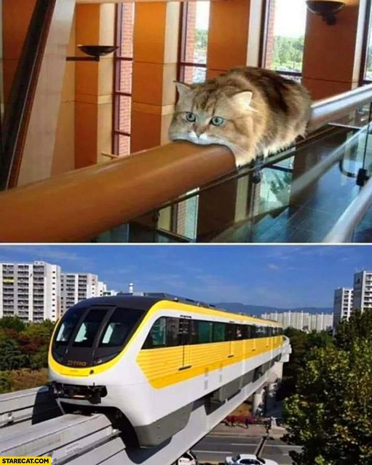 Railway cat looks like a train