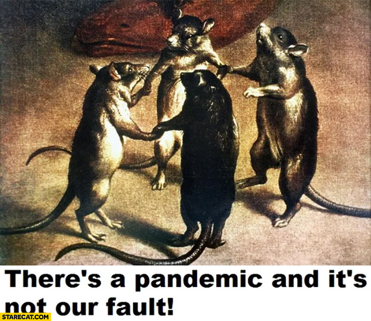 Rats there's a pandemic and it's not our fault