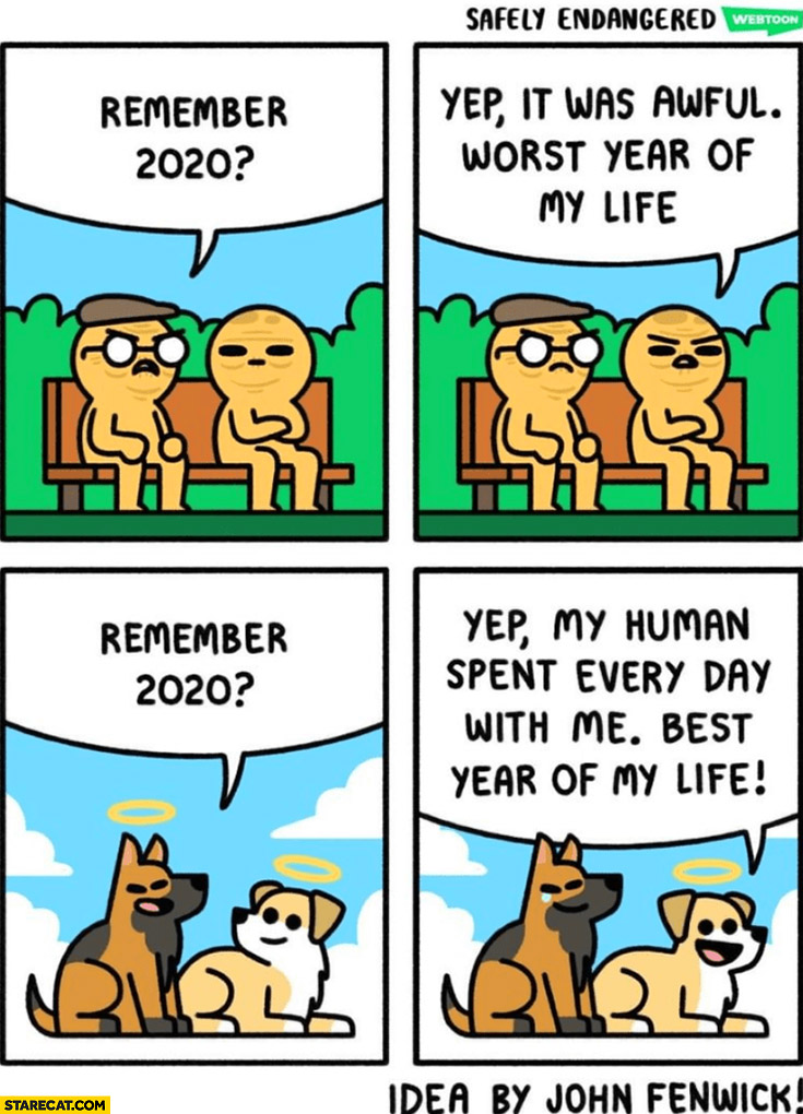 Remember 2020? Worst year of my life. Dogs: best year of my life my human spent every day with me comic