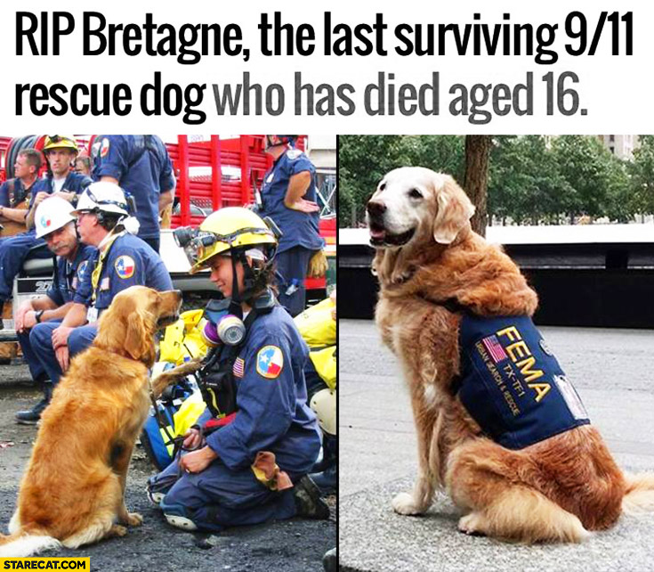 RIP Bretagne the last surviving 9/11 rescue dog who has died aged 16