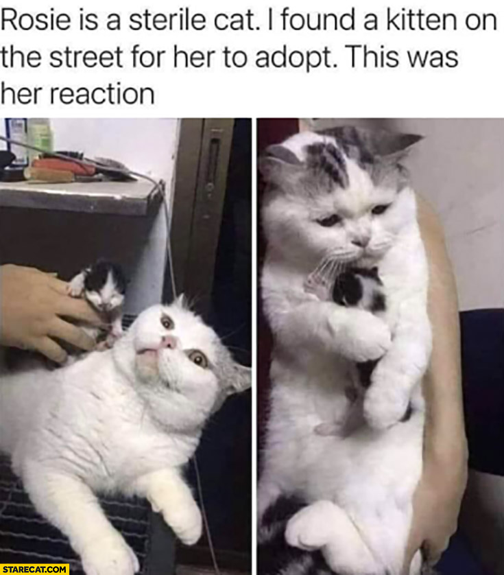 Rosie is a sterile cat I found a kitten on the street for her to adopt this was her reaction