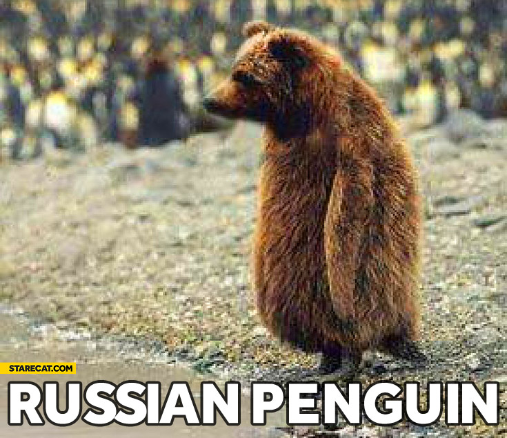 Russian penguin