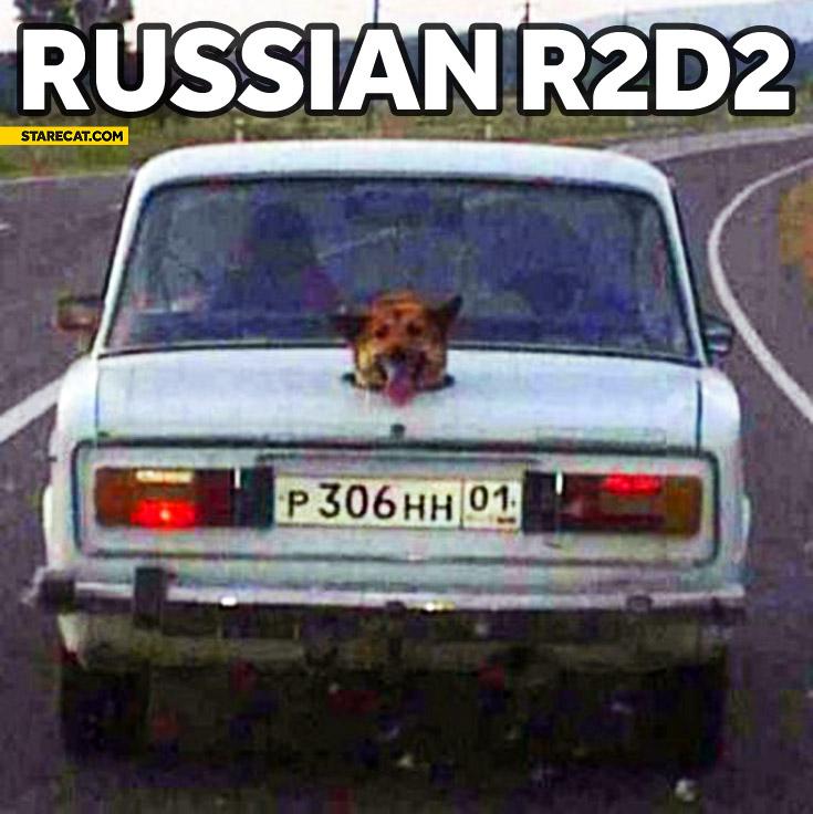 Russian R2D2 dog