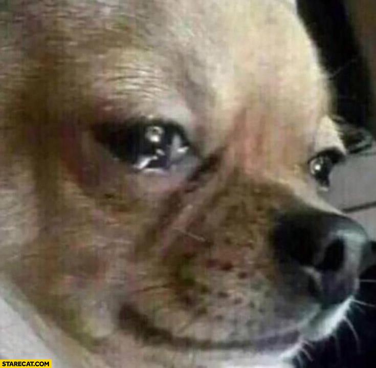 Sad crying dog tears reaction meme