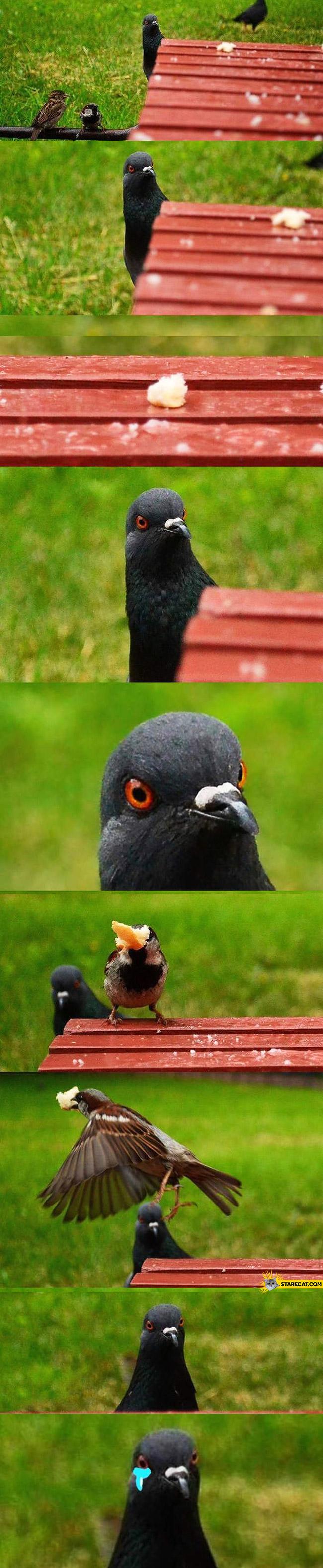 Sad pigeon crying