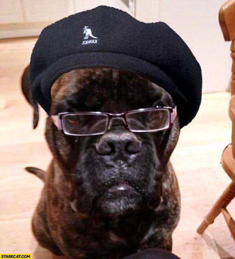 Samuel L. Jackson dog