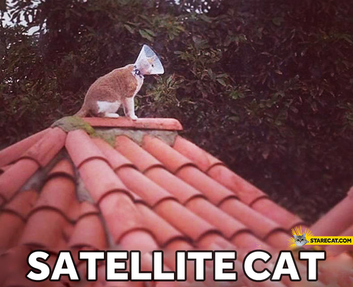 Satellite cat