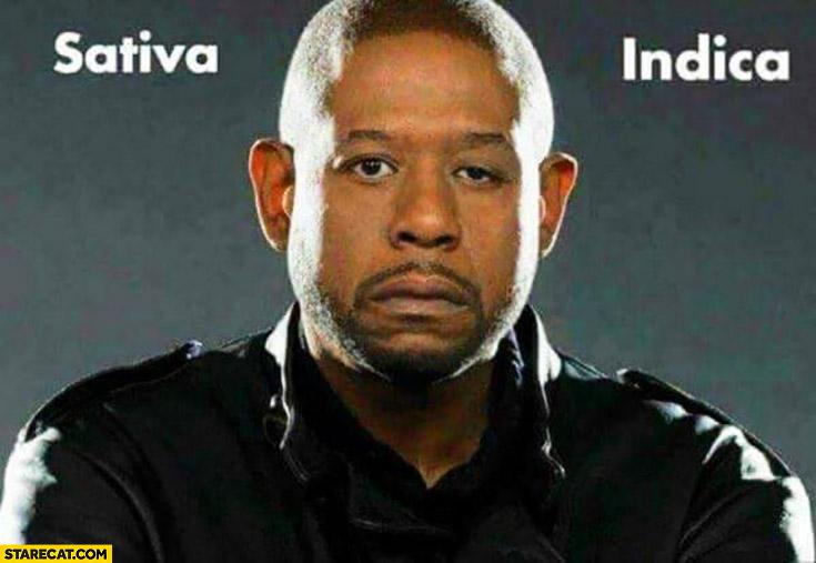 Sativa indica Forest Whitaker faces marijuana meme
