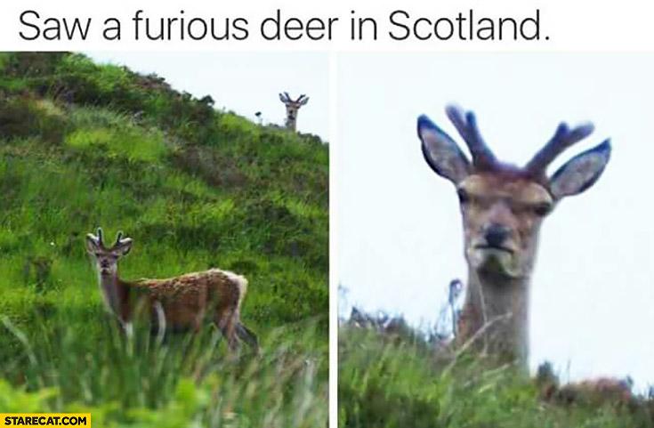 Saw a furious deer in Scotland