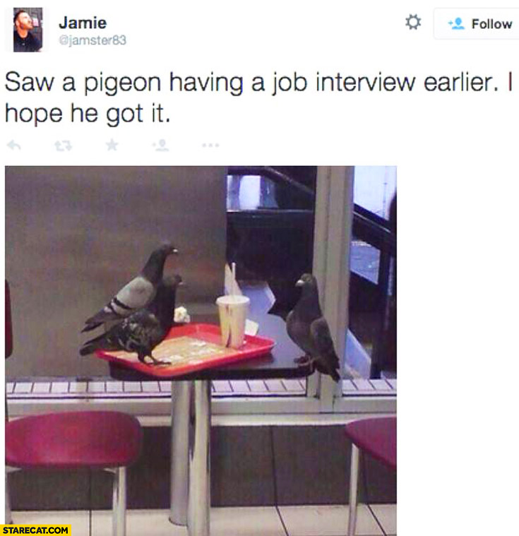 Saw a pigeon having a job interview earlier I hope he got it