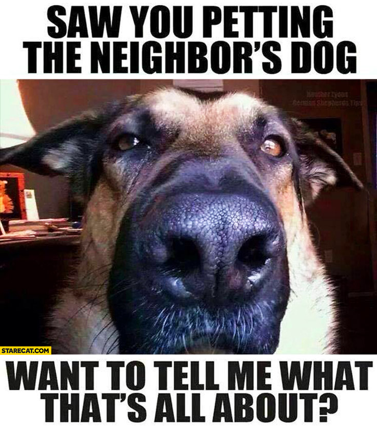 Saw you petting the neighbors dog want to tell me what's that all about
