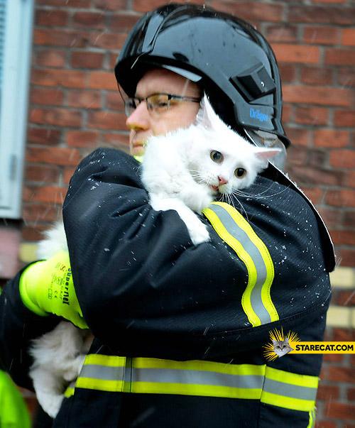 Scared cat fireman