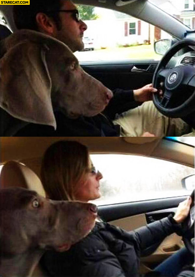Scared dog when wife drives