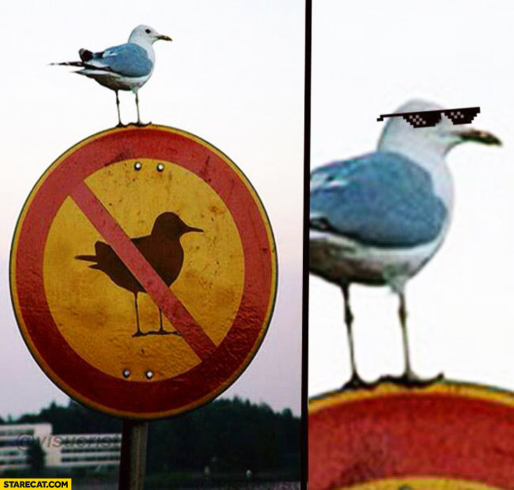Seagull on a not allowed sign thug life