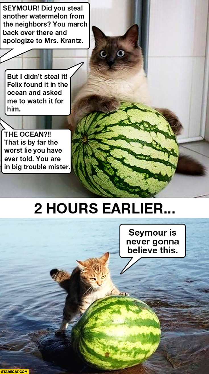 Seymour did you steal another watermelon from the neighbors? Felix found it in the ocean cat rolling watermelon