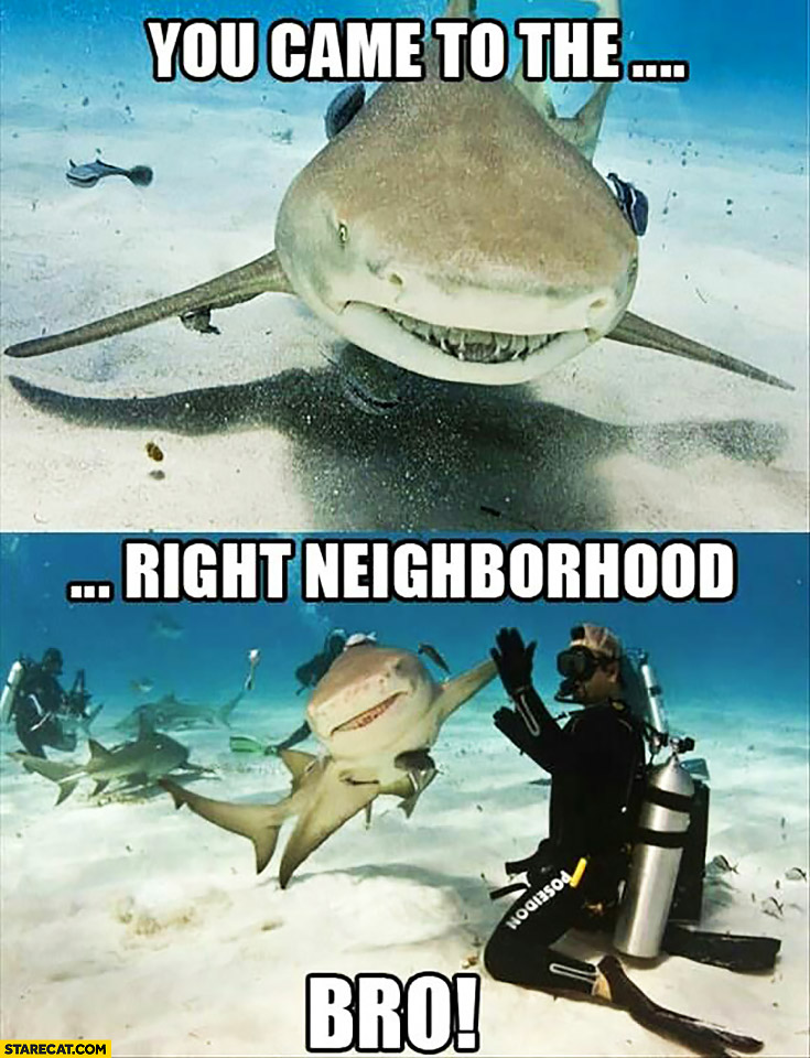 Shark you came to the right neighborhood bro high five