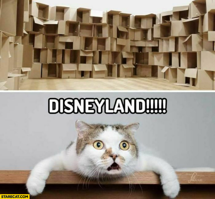 Shocked cat room full of boxes Disneyland