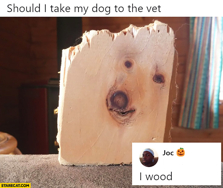 Should I take my dog to the wet? I wood. Piece of wood looking like a dog