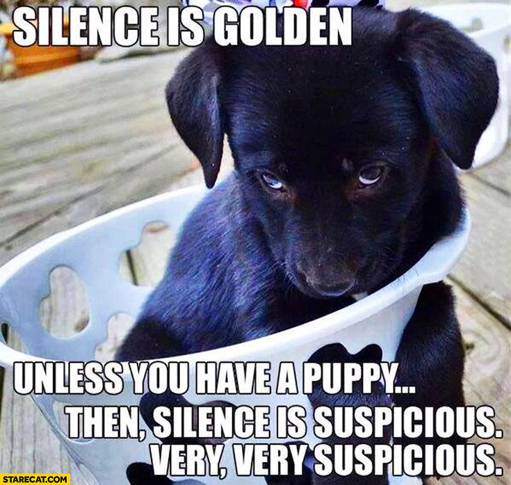 Silence is golden unless you have a puppy. Then, silence is suspicious. Very, very, suspicious