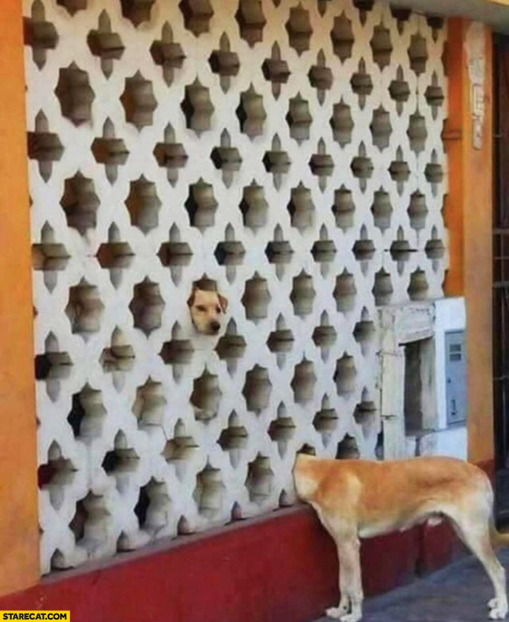 Silly confusing dog picture head from the wall