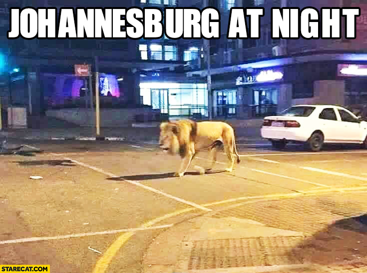 Single wolf wandering Johannesburg at night