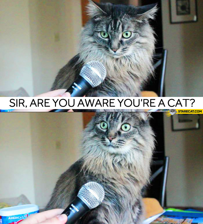 Sir, are you aware you're a cat?