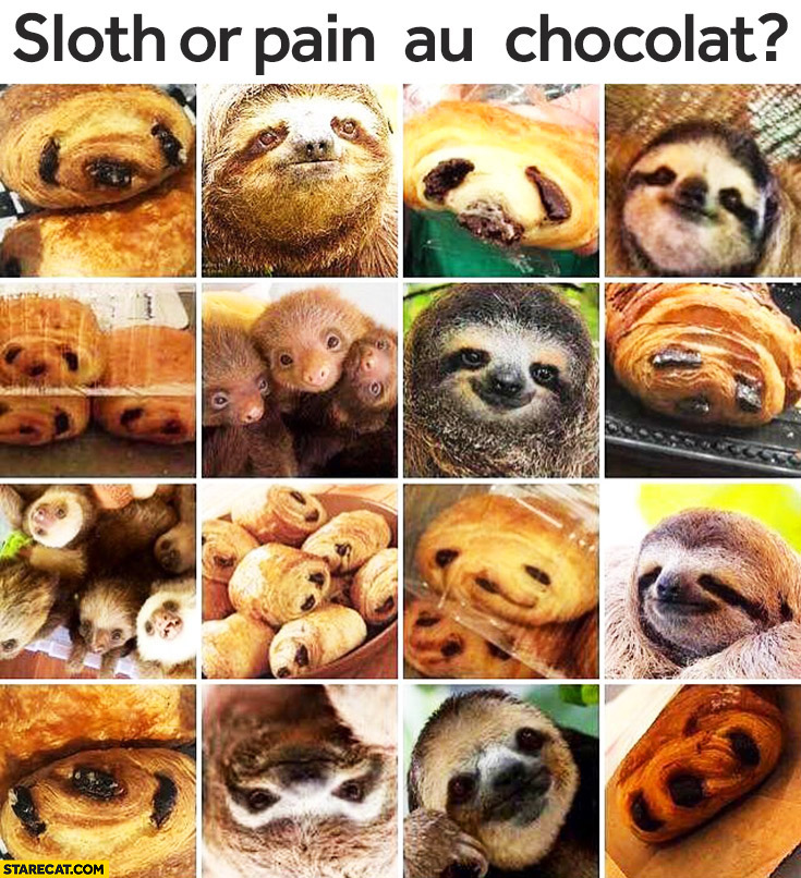 Sloth or pain au chocolat? guess silly riddle