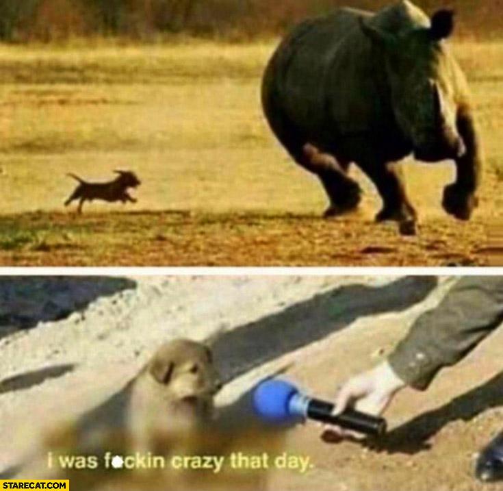Small dog chasing a rhinosaur it was crazy that day