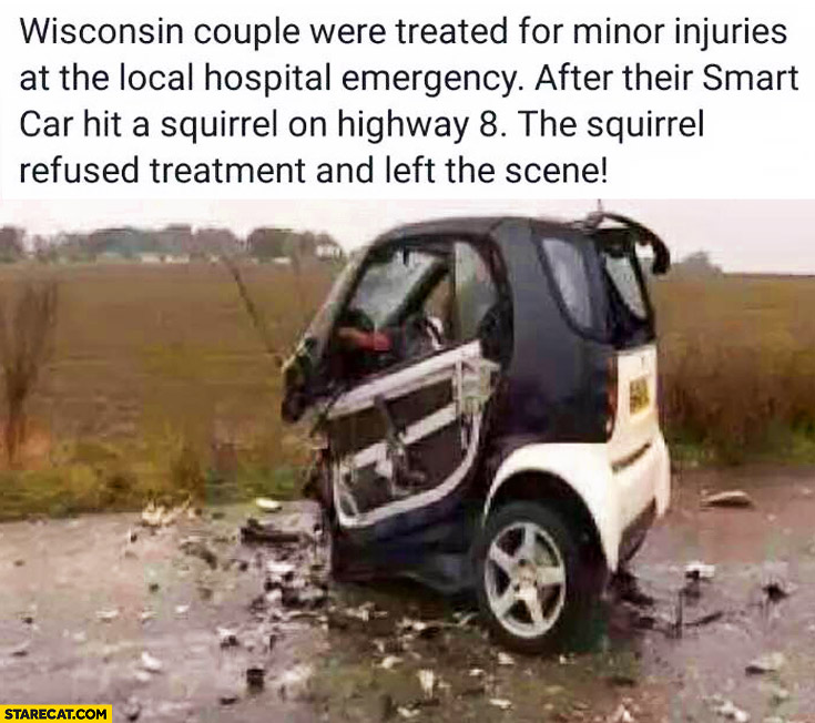 Smart hit squirrel on a highway totally destroyed trolling