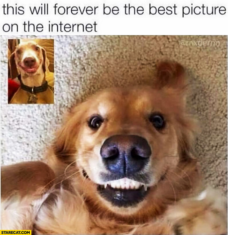 Smiling dogs on Skype this will forever be the best picture on the internet