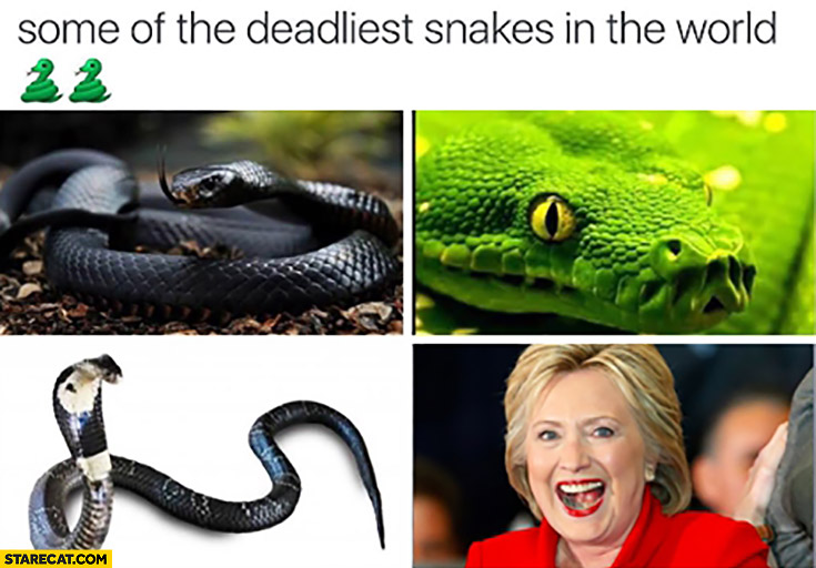 Some of the deadliest snakes in the world Hillary Clinton