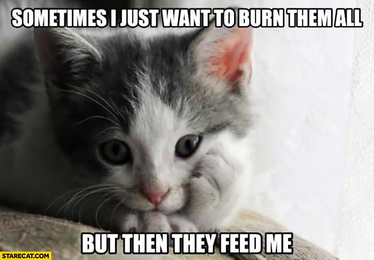 Sometimes I just want to burn them all but then they feed me. Confused cat meme