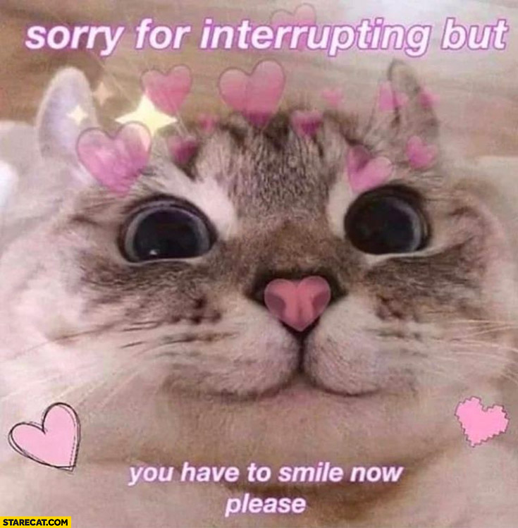 Sorry for interrupting but you have to smile now please cute cat